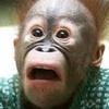 Rap do Homem Macaco