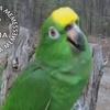 Malandramente com pássaros